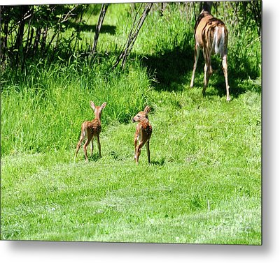 Off They Go Metal Print by Sandra Updyke