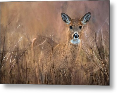 Metal Print featuring the photograph Oh Deer by Robin-lee Vieira