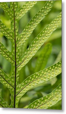Oh Fern Metal Print by Christina Lihani