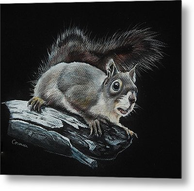 Oh Nuts  Metal Print by Jean Cormier