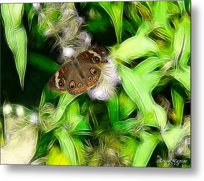 Metal Print featuring the photograph Ohio Buckeye by EricaMaxine  Price