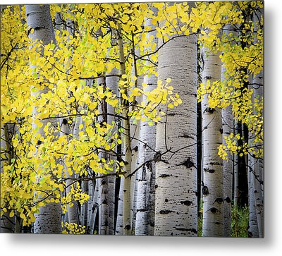 Metal Print featuring the photograph Ohio Pass Gold by The Forests Edge Photography - Diane Sandoval