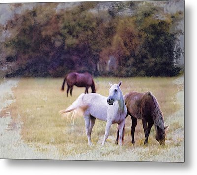 Ok Horse Ranch_1c Metal Print
