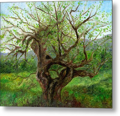 Old Apple Tree Metal Print by FT McKinstry