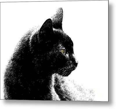 Metal Print featuring the photograph Old Black Cat Two by Lila Fisher-Wenzel