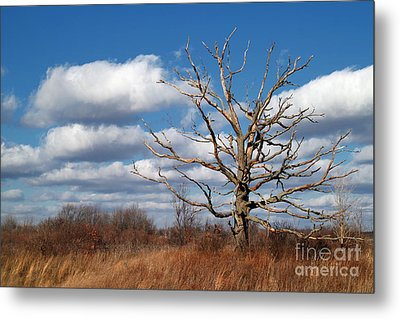Old Dead Tree Metal Print by Jeff Holbrook