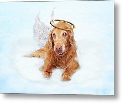 Old Dog Angel On Cloud In Heaven Metal Print by Susan Schmitz