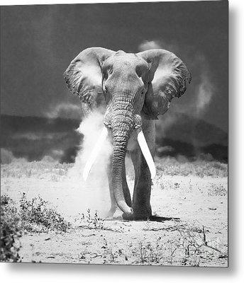 Old Elephant At Amboseli National Park Kenya Metal Print by Konstantin Kalishko
