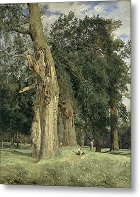Old Elms In Prater Metal Print