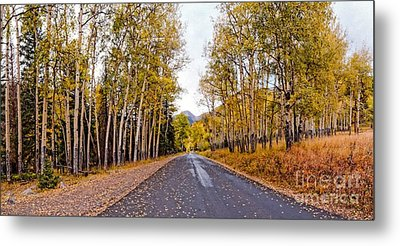 Old Fall River Road With Changing Aspens - Rocky Mountain National Park - Estes Park Colorado Metal Print by Silvio Ligutti