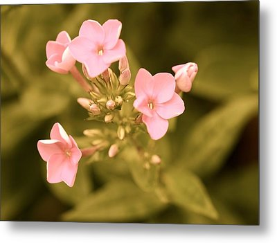Metal Print featuring the photograph Old Fashioned Spring by Corinne Rhode
