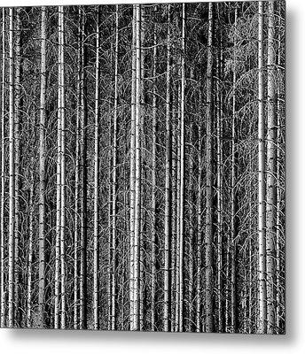Old Forrest Metal Print by Kristian Westgård