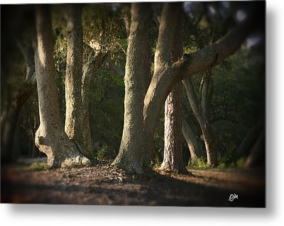 Metal Print featuring the photograph Old Friends Meet In The Woods by Phil Mancuso