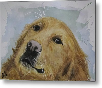 Old Golden Retriver Metal Print