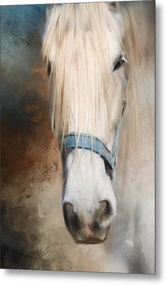 Metal Print featuring the photograph Old Grey by Robin-Lee Vieira