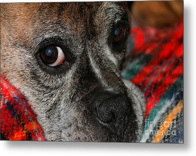Metal Print featuring the photograph Old Man Boxer by Debbie Stahre