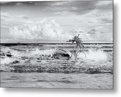 Old Man In The Sea Metal Print by Carolyn Dalessandro