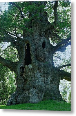 Old Man Tree Metal Print by Digital Art Cafe