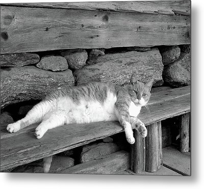 Old Mill Cat Metal Print by Sandi OReilly