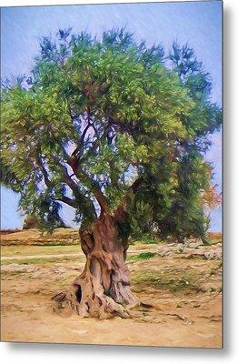 Old Olivetree Metal Print by Lutz Baar