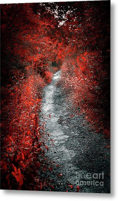 Old Path In Red Forest Metal Print