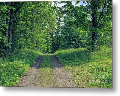 Old Road Through The Woods Metal Print