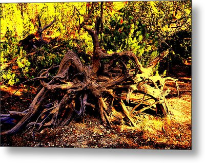 Old Roots Metal Print by Aron Chervin