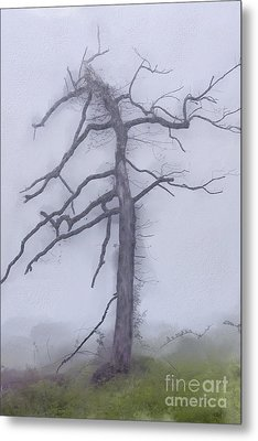 Old Tree In Fog In The Blue Ridge Ap Metal Print