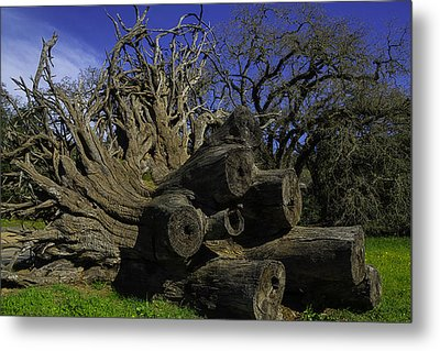 Old Tree Roots Metal Print by Garry Gay