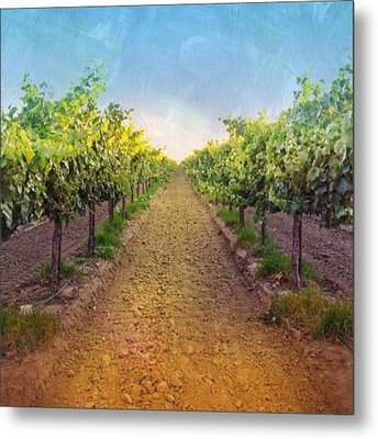 Old #vineyard Photo I Rescued From My Metal Print by Shari Warren