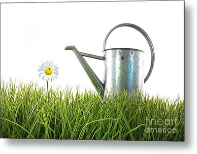 Old Watering Can In Grass With White Metal Print by Sandra Cunningham
