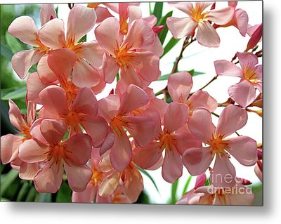 Metal Print featuring the photograph Oleander Dr. Ragioneri 4 by Wilhelm Hufnagl