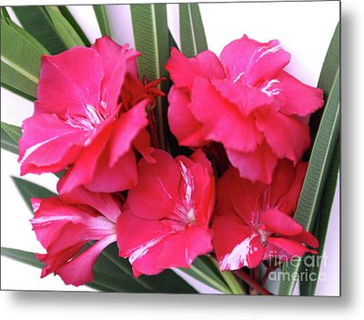 Metal Print featuring the photograph Oleander Geant Des Batailles 1 by Wilhelm Hufnagl