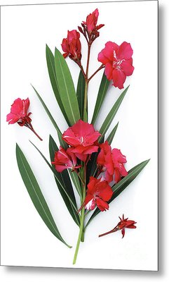 Metal Print featuring the photograph Oleander Geant Des Batailles 2 by Wilhelm Hufnagl