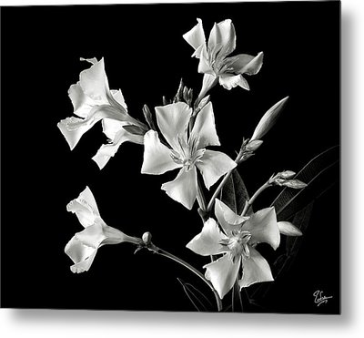 Oleander In Black And White Metal Print by Endre Balogh