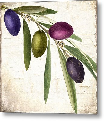 Olive Branch Metal Print by Mindy Sommers