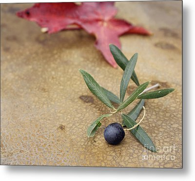 Metal Print featuring the photograph Olive by Cindy Garber Iverson