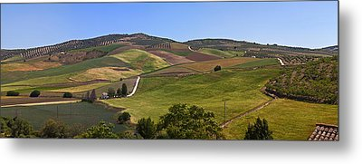 Olive Groves, Malaga Province Metal Print by Panoramic Images