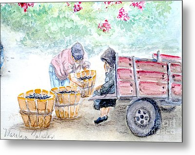 Olive Pickers Metal Print by Marilyn Zalatan