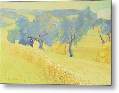 Olive Trees In Tuscany Metal Print