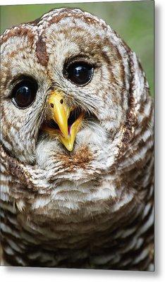 Oliver Owl Metal Print by Arthur Dodd