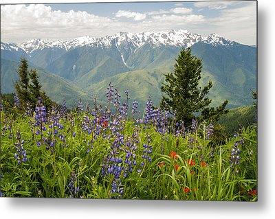 Olympic Mountain Wildflowers Metal Print