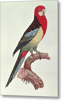 Omnicolored Parakeet Metal Print by Jacques Barraband