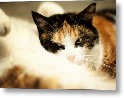 Metal Print featuring the photograph On A Furry Pillow by Laura Melis