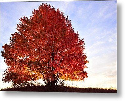 On Fire Metal Print by Terri Gostola