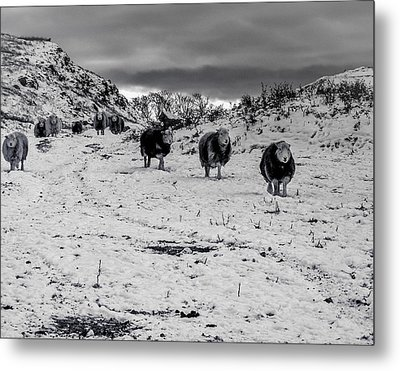 Metal Print featuring the photograph On Our Way by Keith Elliott