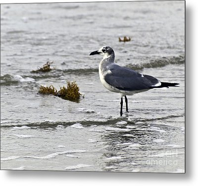 Metal Print featuring the photograph On The Beach Two by Ken Frischkorn