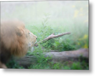 On The Charge Metal Print by Karol Livote