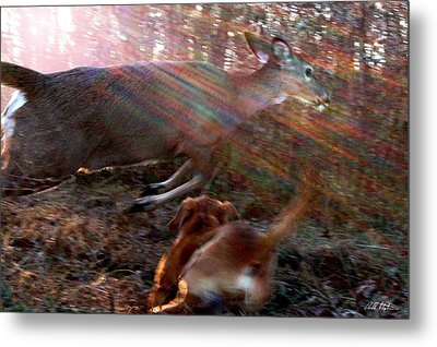 On The Chase Metal Print by Bill Stephens