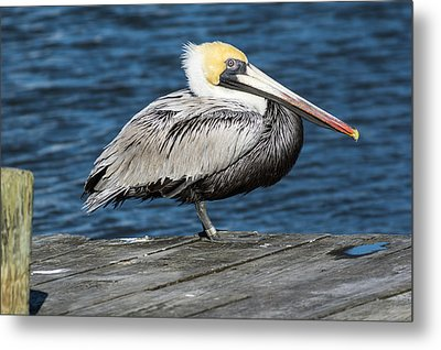 On The Dock Metal Print by Gregg Southard